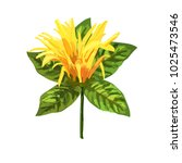 yellow tropical plant. mexican... | Shutterstock .eps vector #1025473546