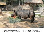 indian rhinoceros are eating in ... | Shutterstock . vector #1025509462
