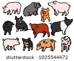 Stock vector various breeds of pigs 1025544472