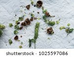 close up green sage branch with ... | Shutterstock . vector #1025597086