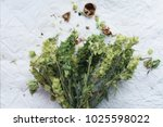 close up bunch of green sage... | Shutterstock . vector #1025598022