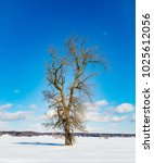 lonely tree in rural quebec... | Shutterstock . vector #1025612056