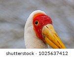 a large yellow billed stork ...   Shutterstock . vector #1025637412