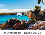 land iguana with a white boat... | Shutterstock . vector #1025665726