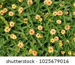 beautiful  flower background ... | Shutterstock . vector #1025679016