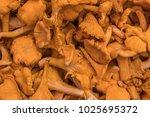 mushroom chanterelle  background | Shutterstock . vector #1025695372