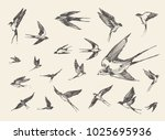 Stock vector a flock of birds flying swallows hand drawn vector illustration sketch 1025695936