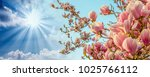 magnolia tree blossom with... | Shutterstock . vector #1025766112