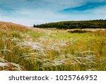 summer landscape   flowering...