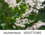 the flower of grass that growth ... | Shutterstock . vector #1025772382