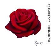 red rose isolated on white... | Shutterstock .eps vector #1025804578