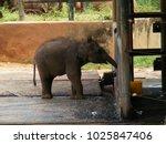 milk feeding to elephant... | Shutterstock . vector #1025847406