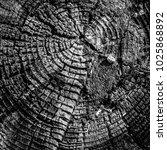 stump of tree felled   section... | Shutterstock . vector #1025868892