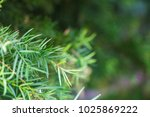 green leaves environment flora... | Shutterstock . vector #1025869222