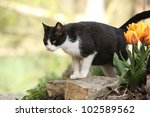 Cat With Tulip