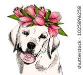 portrait of labrador retriever... | Shutterstock .eps vector #1025896258
