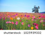colorful flora in summer | Shutterstock . vector #1025939332