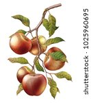apple branch hand drawing... | Shutterstock . vector #1025960695
