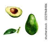 avocado on white background.... | Shutterstock . vector #1025968486
