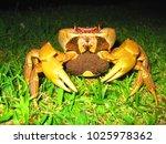 awase   okinawa   japan  july17 ...   Shutterstock . vector #1025978362