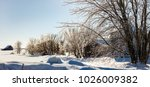 icicle tree in rural quebec... | Shutterstock . vector #1026009382