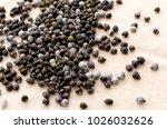 job's tears   coix lachryma... | Shutterstock . vector #1026032626
