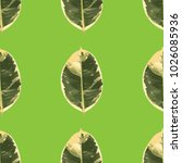 leaf ficus tree a realistic... | Shutterstock .eps vector #1026085936