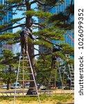a pair of arborists  tree...   Shutterstock . vector #1026099352