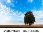 growing in the birch field in... | Shutterstock . vector #1026181882