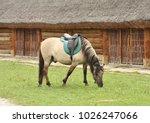 saddled horse eating grass in... | Shutterstock . vector #1026247066