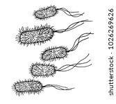 vector black sketch bacteria... | Shutterstock .eps vector #1026269626