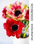 bouquet of colorful anemones in ... | Shutterstock . vector #1026286126