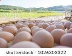group of organic free range... | Shutterstock . vector #1026303322