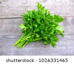 Parsley Bunch On Wood Table...