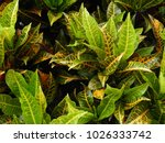 lush foliage background | Shutterstock . vector #1026333742