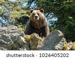 north vancouver  british... | Shutterstock . vector #1026405202