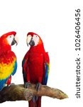 macaw parrot isolated on the... | Shutterstock . vector #1026406456