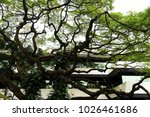 curves of big tree and green... | Shutterstock . vector #1026461686