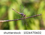 Dragon Fly On A Branch In The...