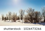 icicle tree in rural quebec... | Shutterstock . vector #1026473266