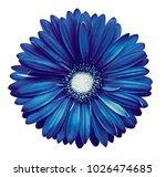 blue white gerbera flower ... | Shutterstock . vector #1026474685