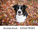 a border collie dog surrounded... | Shutterstock . vector #1026478582