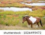 wild pony  equus caballus  at... | Shutterstock . vector #1026495472