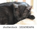 a cat relaxes on a soft bed... | Shutterstock . vector #1026583696