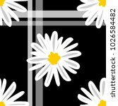 White Daisies And White Line...
