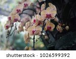 flowers bloom flora  | Shutterstock . vector #1026599392