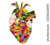 low poly style. anatomical... | Shutterstock .eps vector #1026632692