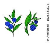 berries vector illustration....   Shutterstock .eps vector #1026651676
