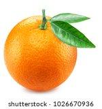 orange fruit with orange leaves....