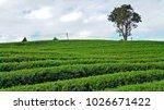 tea plantation in chiang rai ... | Shutterstock . vector #1026671422